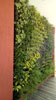 Ahuja vertical green wall_100.jpg