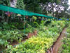 Chembur Nursery_05_small photo.jpg