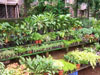 Chembur Nursery_06_small photo.jpg