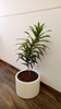 Indoor Potted Plant_01 100.jpg