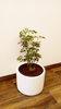 Indoor Potted Plant_02 100.jpg