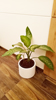 Indoor Potted Plant_04 100.jpg