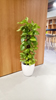 Indoor Potted Plant_05 100.jpg