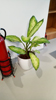 Indoor Potted Plant_06 100.jpg