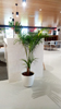 Indoor Potted Plant_07 100.jpg