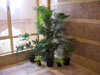 Potted Plants Group 01 small.jpg