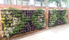 Vertical Green Wall_02 100.jpg