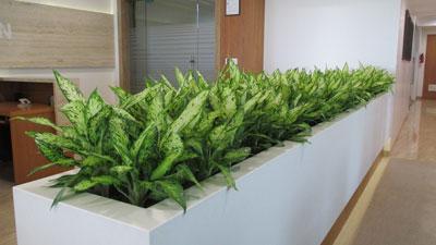 Rent A Plant