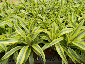 Supply of Plants