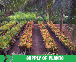 Supply of Plants