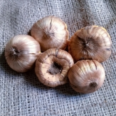 Gladiolus Flower Bulbs - Mix Colour