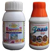 Rootstar + Trinash