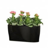 Plastic Self Watering Rectangular Pots - Coloured