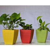 Plastic Square Planters - Coloured
