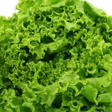 Lettuce Iceberg Seeds