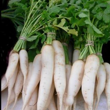 Raddish Long White Seeds