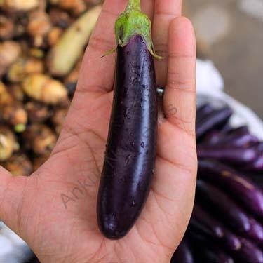 Brinjal Purple Slender Seeds